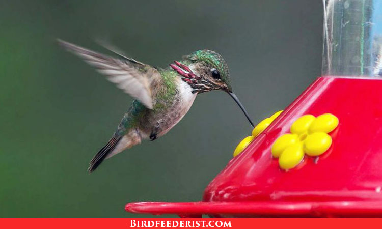 The 13 Best Hummingbird Feeders 2021 – Expert Reviews and buyer Guide