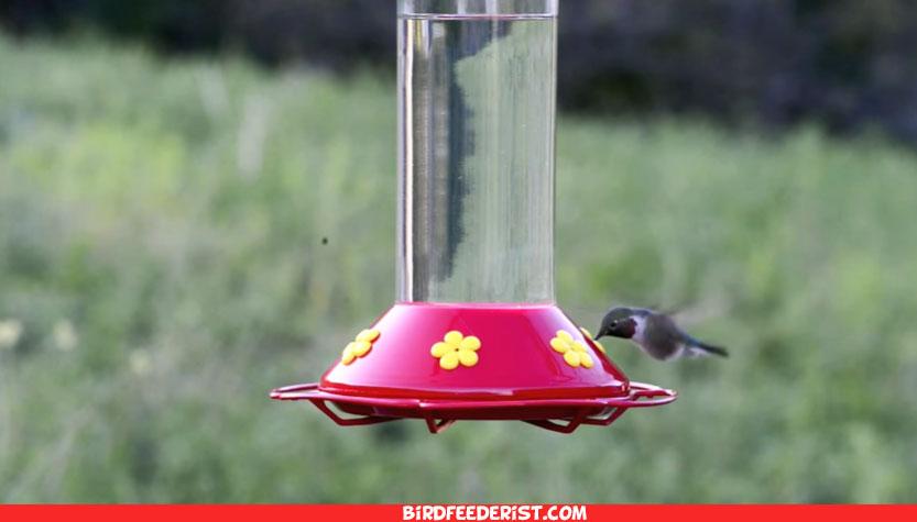 Best glass hummingbird feeder