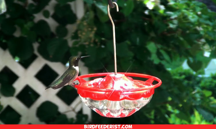 The 10 Best Hummingbird Feeders with Perch 2021 | Buyer Guide & Reviews