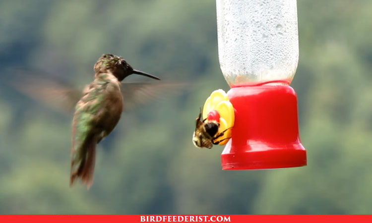 10 Best Hummingbird Feeder to keep bees Away 2021 | Expert Reviews & Guide