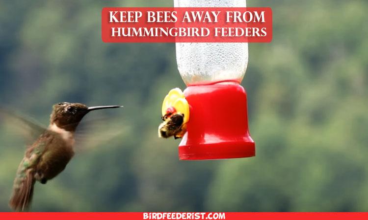 How to keep bees Away from Hummingbird feeders – BirdFeederist