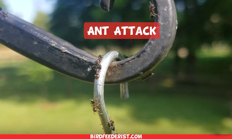 How To Keep Ants Out of Hummingbird Feeder Complete Solution