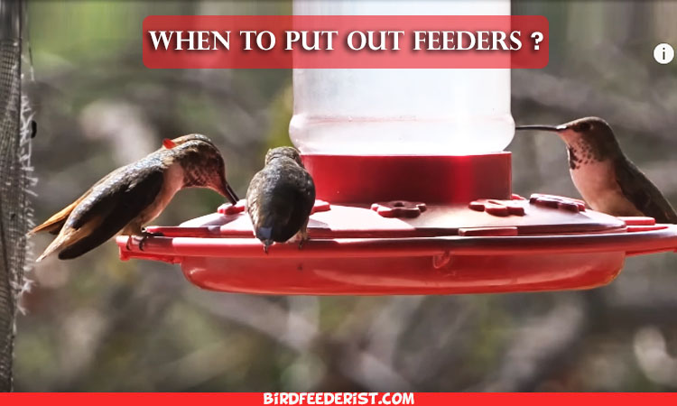 When to Put Out Hummingbird Feeders Complete A-Z Guide