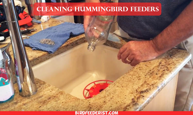 How to Clean Hummingbird Feeder Complete Step by Step Guide