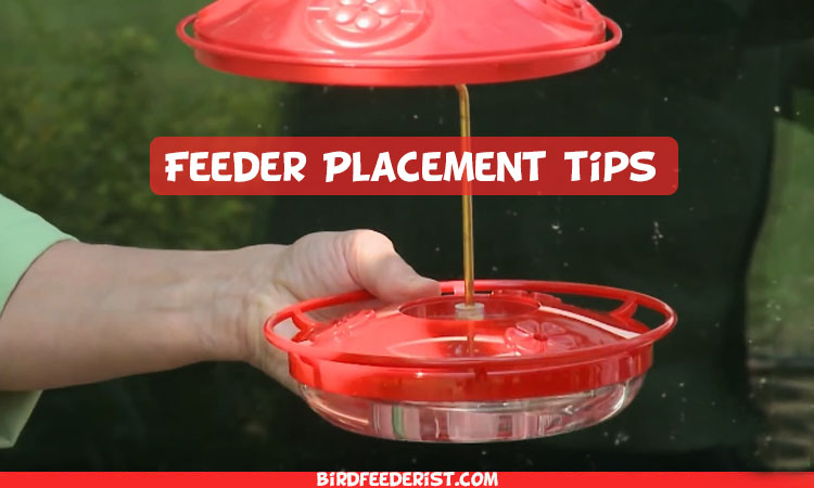 Hummingbird Feeder Placement Complete Guide and Important Tips