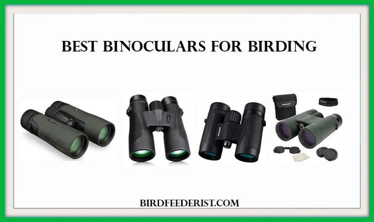 The 5 Best Binoculars for Birding 2020 Reviewed by BirdFeederist