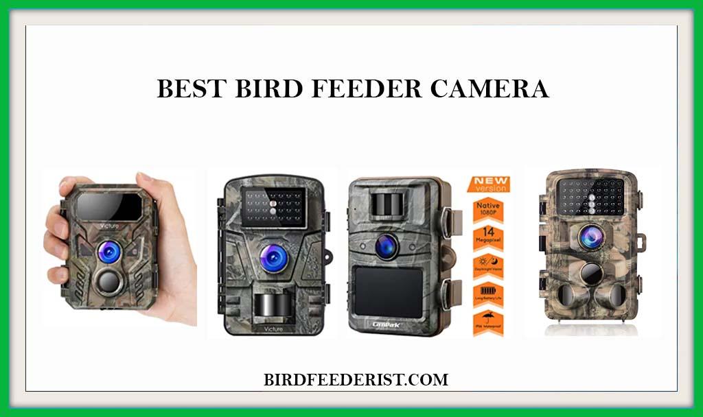 Best Bird Feeder Camera
