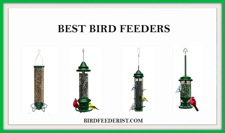 The 5 Best Bird Feeders 2021 Reviewed by BirdFeederist