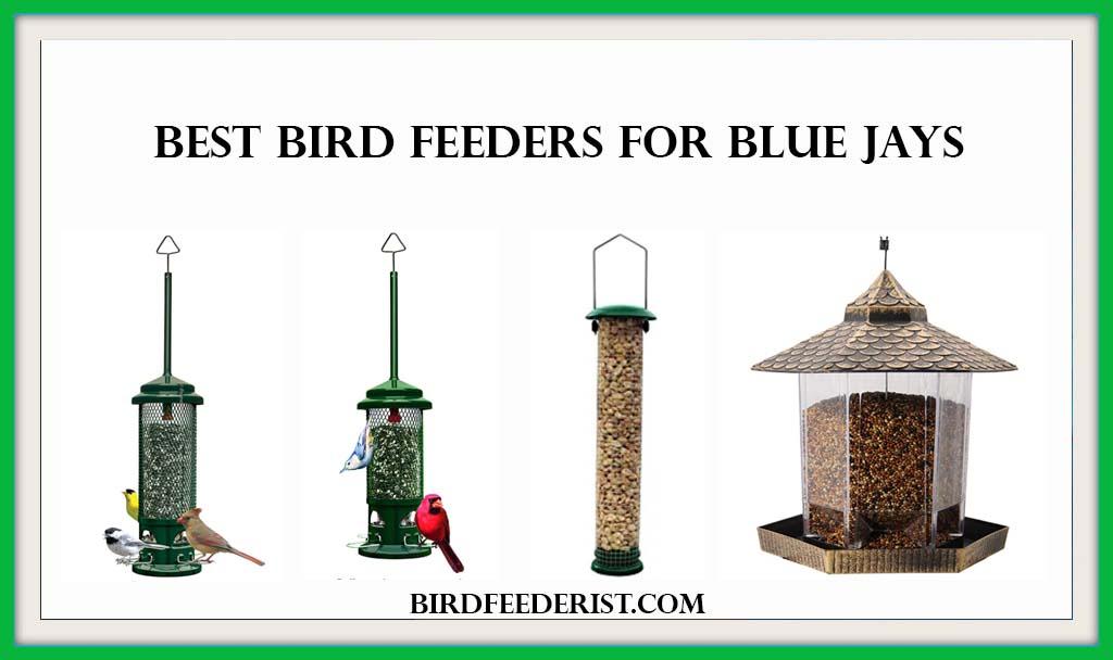 Best Bird Feeders for Blue Jays