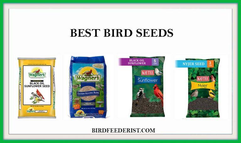 The 5 Best Bird Seeds 2021 that Every bird loves by Birdfeederist