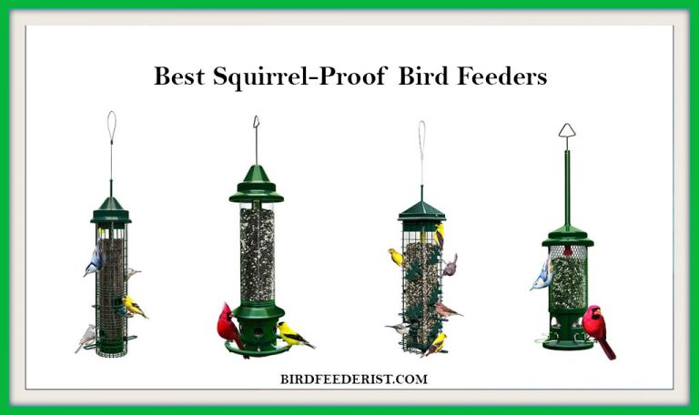 The 5 Best Squirrel Proof Bird Feeders 2020 Reviewed by BirdFeederist