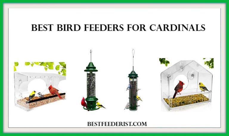 The 5 Best Bird Feeders for Cardinals 2020 Reviewed by BirdFeederist