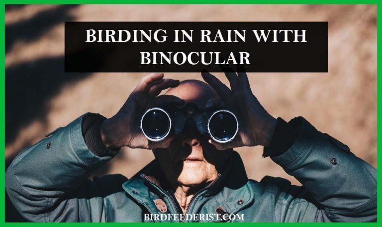 How we can birding with Binocular in rain? Tips For Birding in the Rain