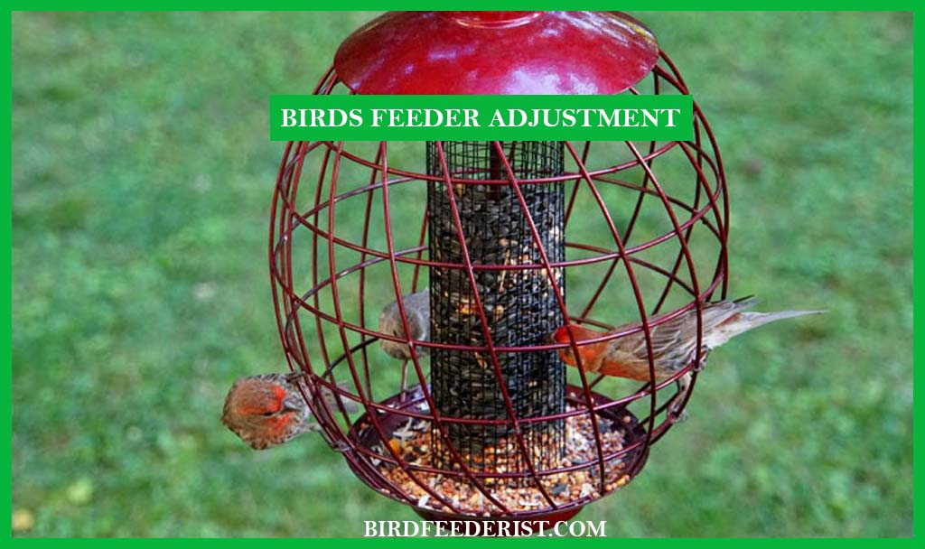 How to adjust the Squirrel-Proof Bird Feeder to keep the squirrel away