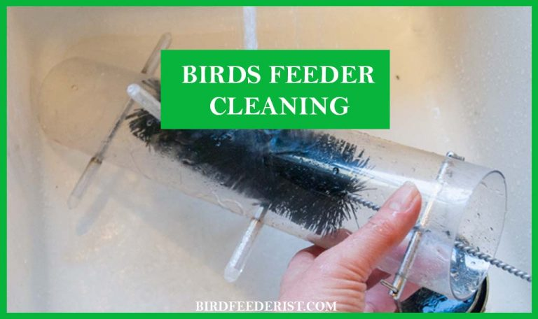 How we can clean the bird feeder safely? By BirdFeederist