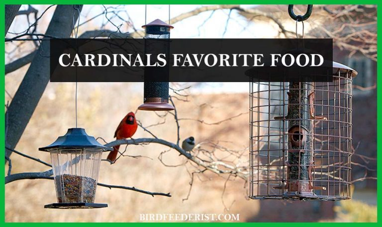 Which is the favorite food of the Cardinals? FAQ Resolved By BirdFeederist