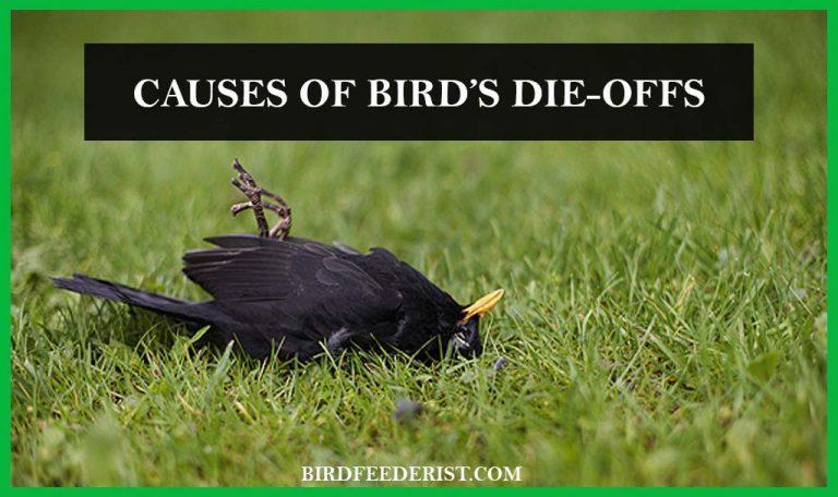 What are the main causes of the bird's die-offs? by BirdFeederist