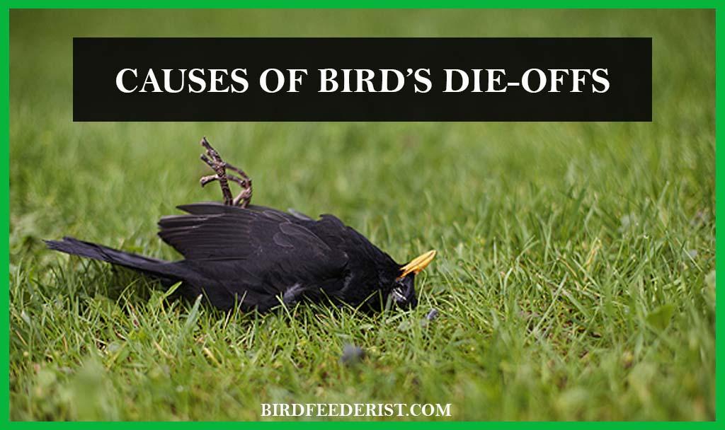 Causes of Bird's Die-offs