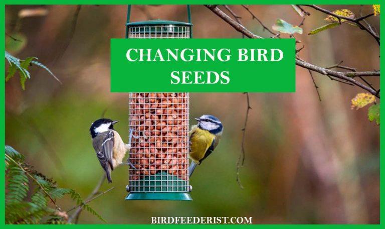 How often should we change the bird seeds? by BirdFeederist