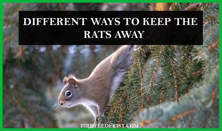 How to keep the Rats away from the bird feeders? by BirdFeederist