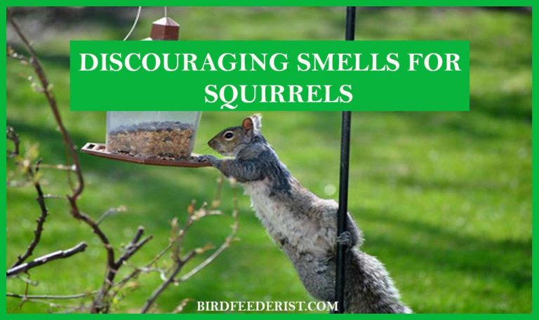 What kind of smell can be used to keep the squirrel away from the bird feeder? by BirdFeederist