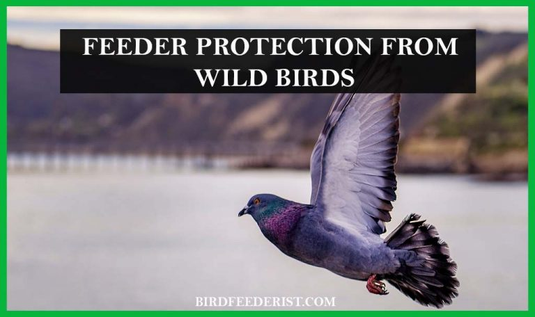 How we can protect our feeders from wild birds? By BirdFeederist
