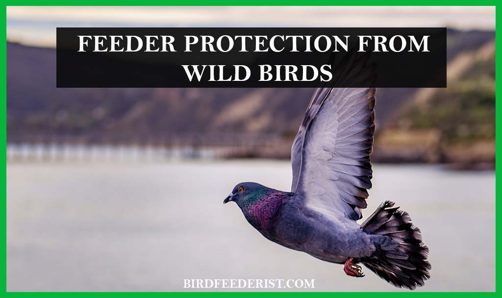 Feeder Protection From Wild Birds