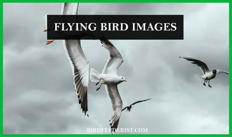 How we can get the flying bird images? Bird Photography Tips By BirdFeederist
