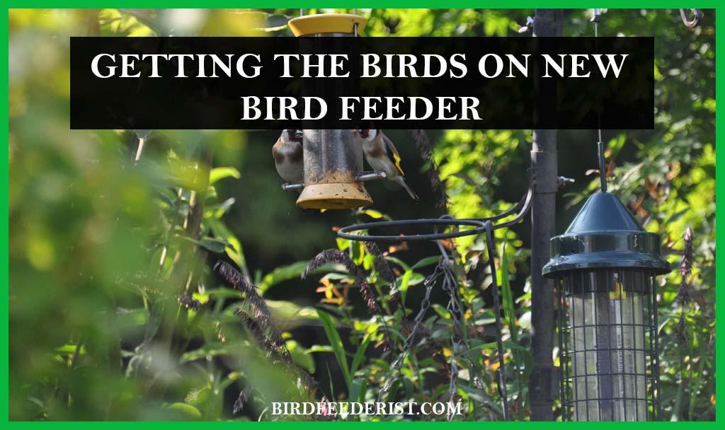 Getting the bird on new feeder