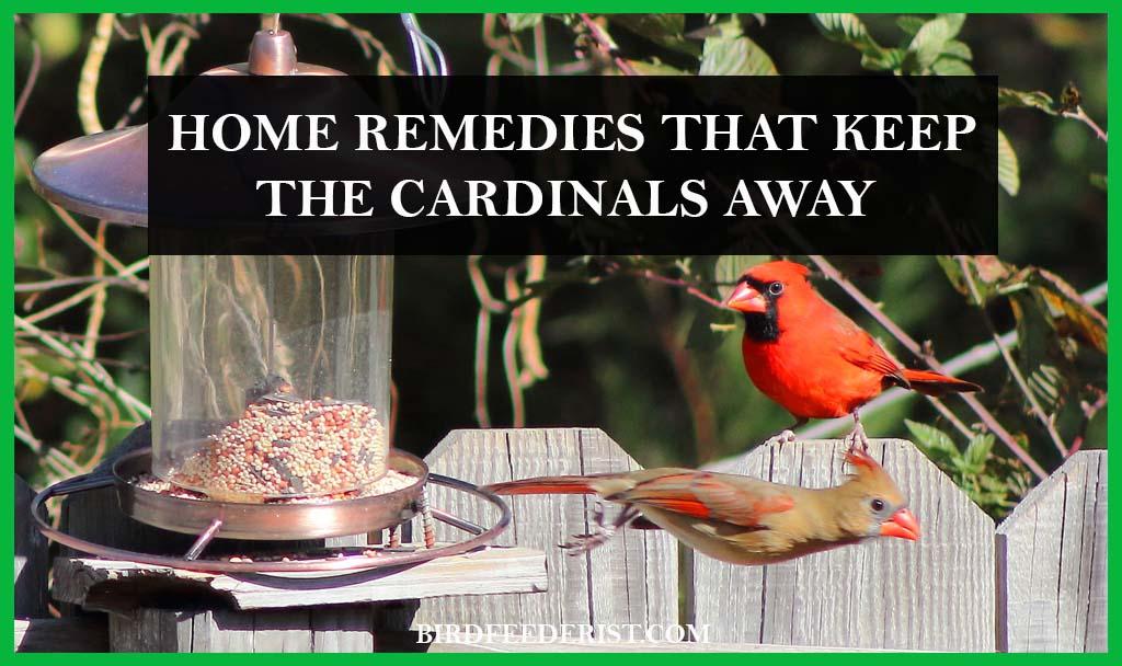 Home remedies that keep cardinals away