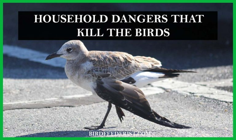 What household dangers kill the birds instantly? by BirdFeederist