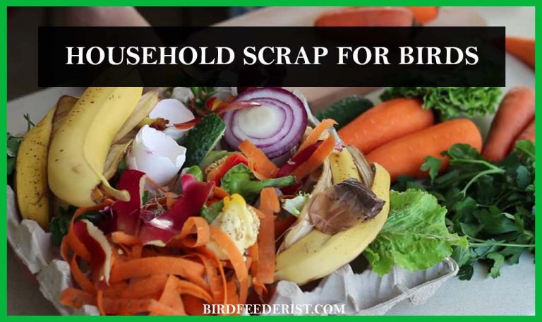Which household scrap can be feed to the birds? By BirdFeederist