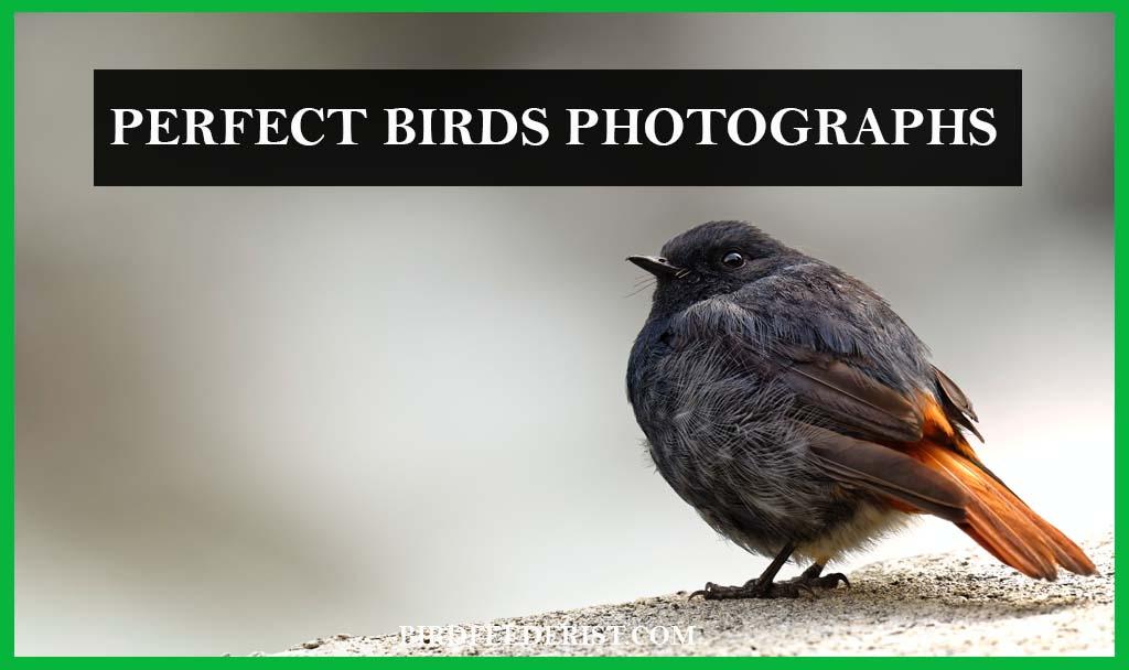 Perfect Birds Photographs