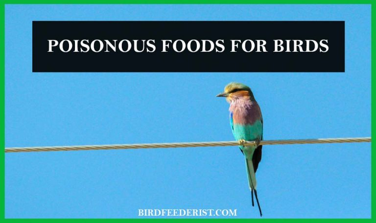 Which Food can be poisonous for the Birds? by BirdFeederist