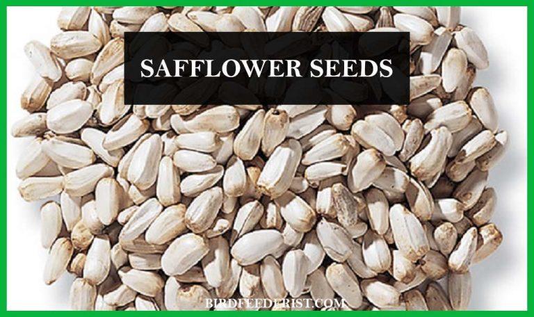 What is the safflower seed? by Birdfeederist