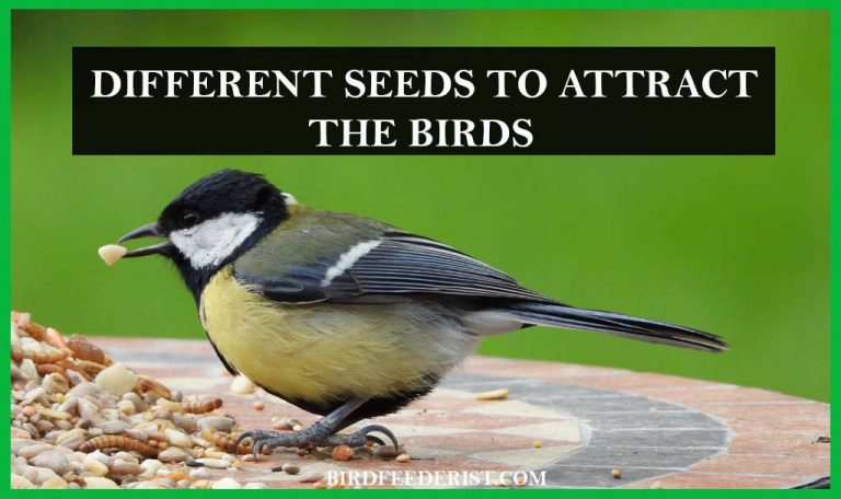What are the different seeds to attract the birds? by BirdFeederist