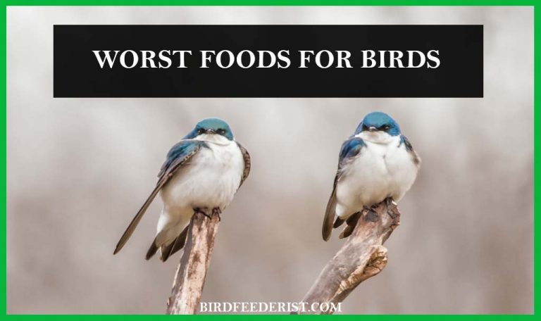 What are the worst foods for the birds? by BirdFeederist