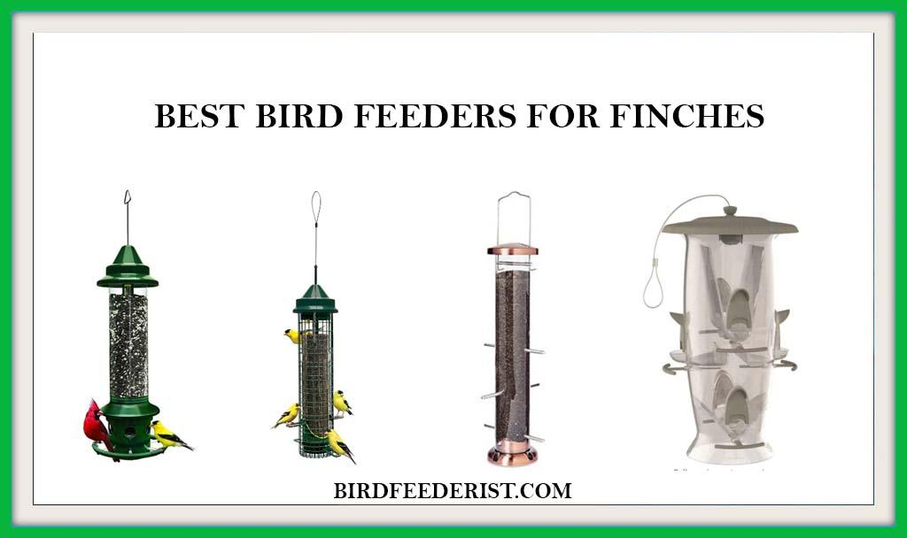 Best Birdfeeders for Finches