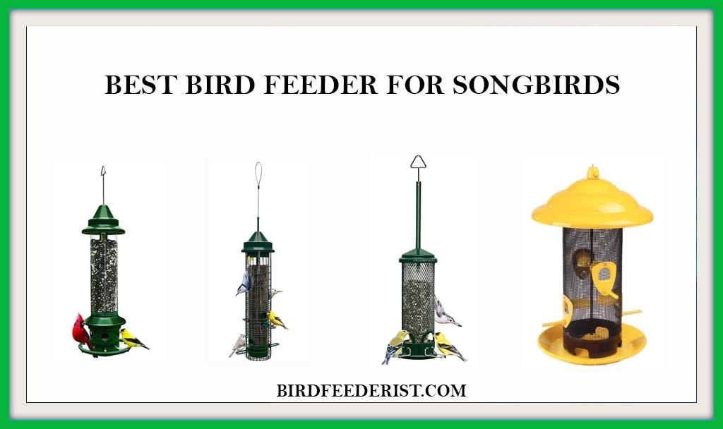 Best birdfeeder for Songbirds