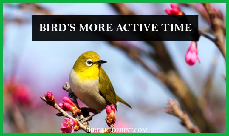 At What time of day the birds are more active? by BirdFeederist