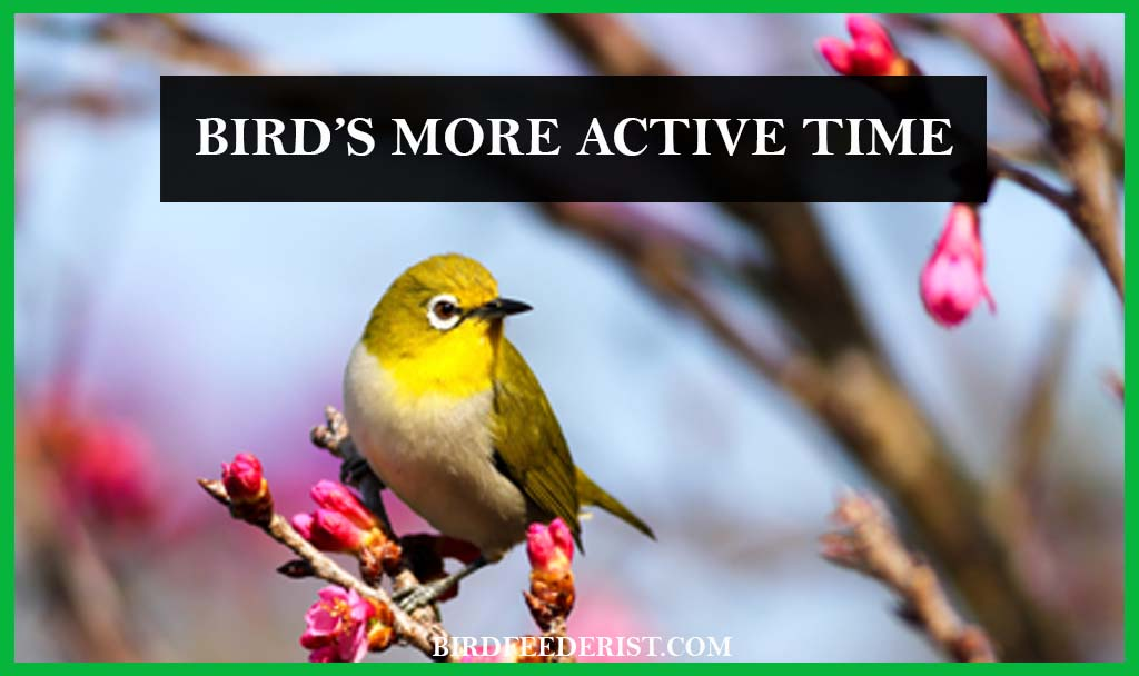 Bird's more active time