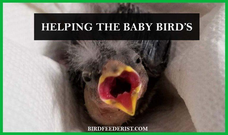 What to do when found a baby bird? by BirdFeederist