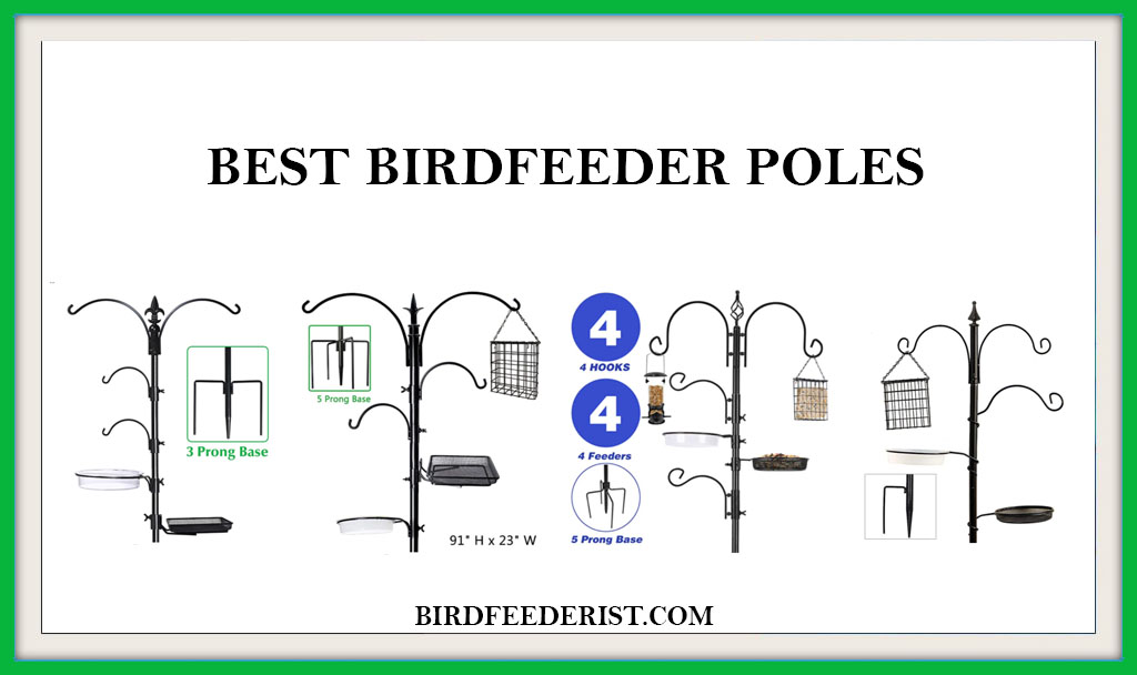 BEST BIRD FEEDER POLES