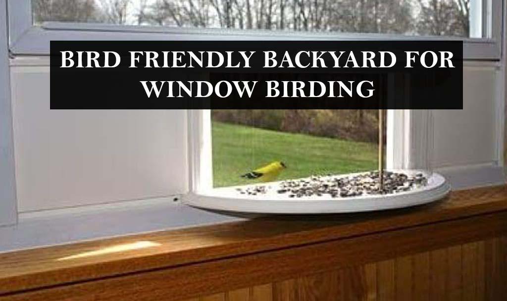 BIRD FRIENDLY BACKYARD FOR WINDOW BIRDING