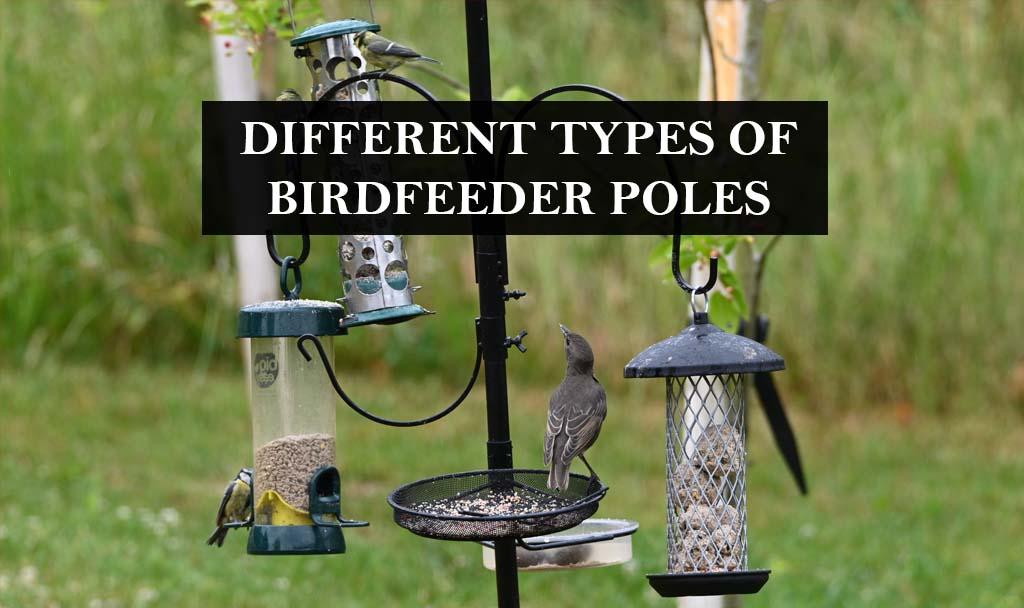 DIFFERENT TYPES OF BIRDFEEDER POLES