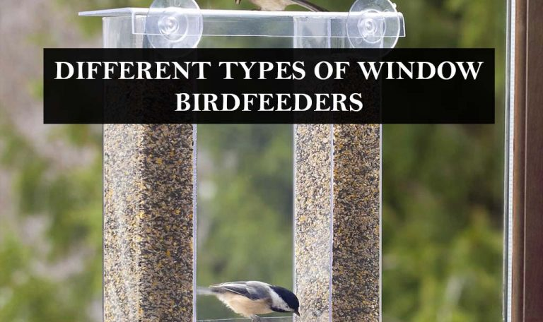 What are the different types of the window bird feeders?