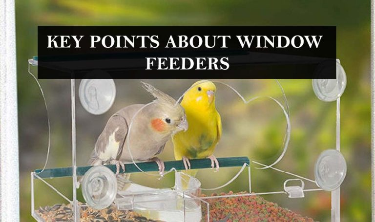 What are the key points about Window feeders? BirdFeederist