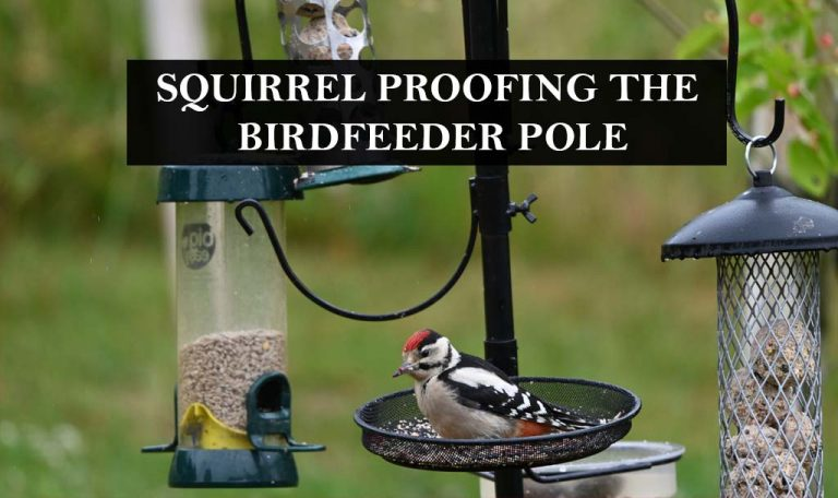 What are the important tips to squirrel proof the bird feeder Pole?