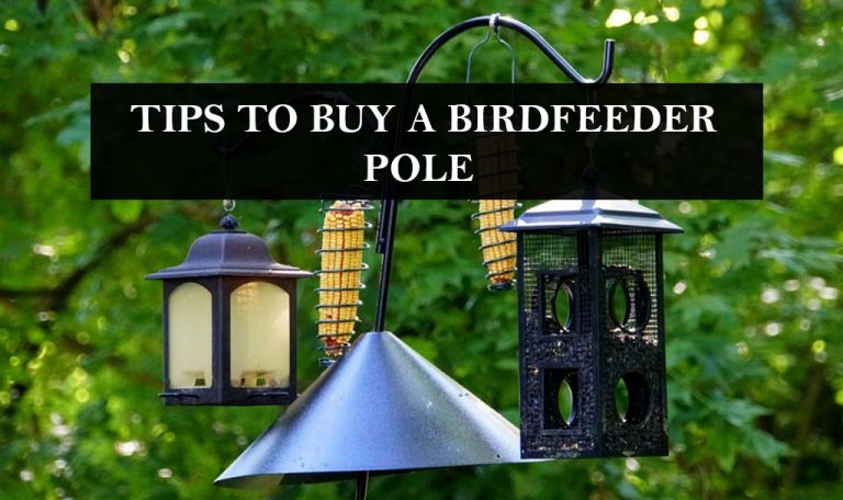 How to Purchase a Perfect Bird Feeder Pole?  7 Effective Tips You Must Consider!