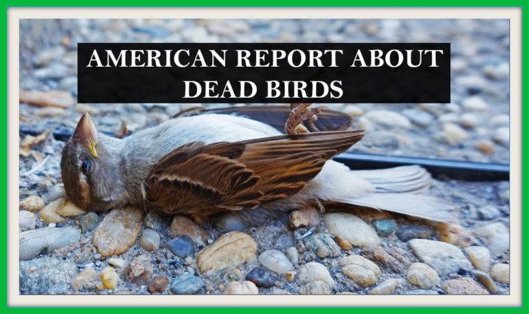 Report of America about sudden death of birds by household danger